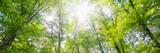 sunlight breaking through fresh green forest