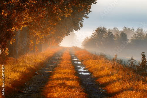 Forest road in the morning mist. Thick morning fog in the autumn forest. Thick morning fog in the forest at pond. Morning landscape in summer thick fog. Dense fog in the morning.