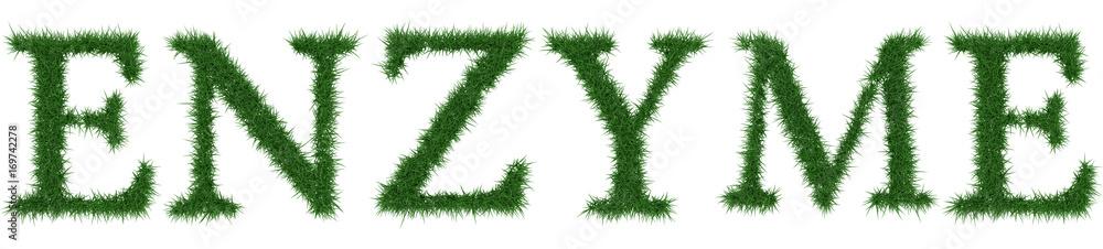 Fototapeta Enzyme - 3D rendering fresh Grass letters isolated on whhite background.