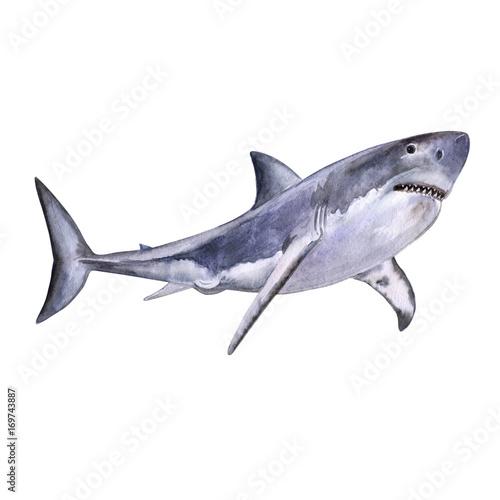 Plakat Akwarela to doskonały biały rekin. Biała śmierć rekin odizolowywający na białym tle. Do projektowania, wydruków, tła. Akwarela. Ilustracja