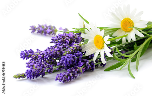 Daisies and Lavender flowers bunch on white background