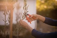 Senior Woman Cutting Plant