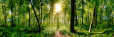 Fototapeta Las - Path in the forest lit by golden sun rays
