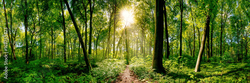 Poster Weg in bos Path in the forest lit by golden sun rays