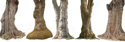 Fotografie, Obraz Trees isolated on white background