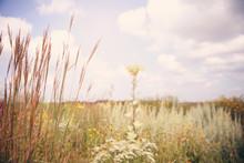 Golden Field Of Grasses