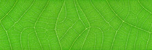 Horizontal Green Leaf Texture ...