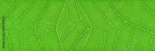 Door stickers Macro photography horizontal green leaf texture for pattern and background