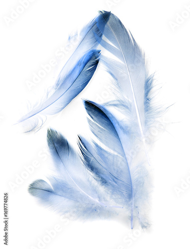 niebieskie-piora-na-bialym-tle