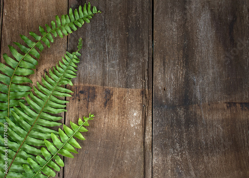 Boston fern leaf border on rustic barn wood