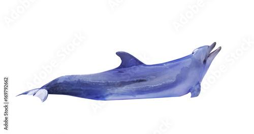 Photographie large blue doplhin on white