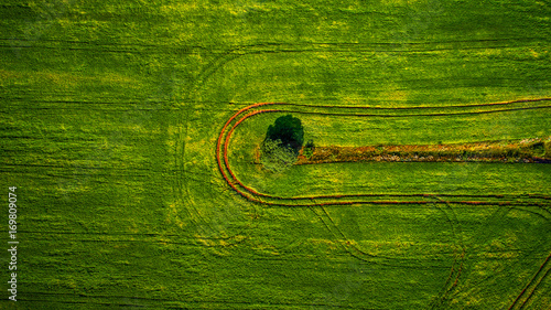 Foto op Plexiglas Groene Aerial view of the vegetable field from drone