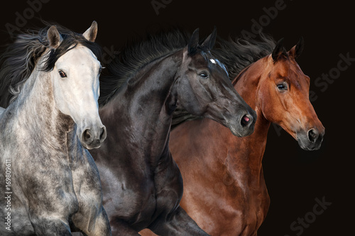 Horse herd portrait in motion on dark background Tableau sur Toile
