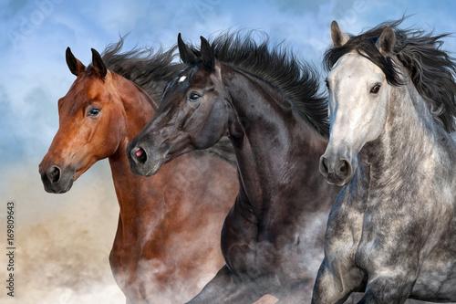 Fototapeta Horses run fast in desert dust obraz