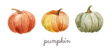 Pumpkin Set On The White Backg...