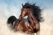 canvas print picture - Bay stallion with long mane run fast in desert dust