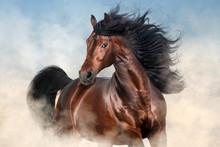 Bay Stallion With Long Mane Run Fast In Desert Dust