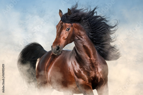 Obraz Bay stallion with long mane run fast in desert dust  - fototapety do salonu