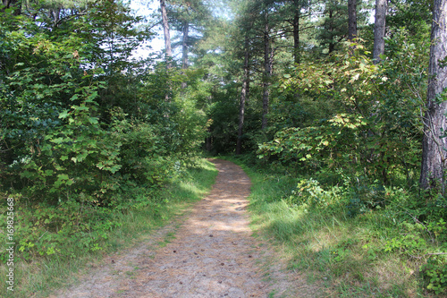 Foto op Canvas Weg in bos Forest path, Noordhollands Duinreservaat