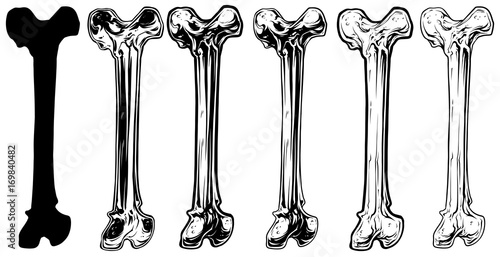 Graphic black and white human bone vector set Canvas Print
