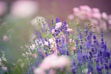 Rosen & Lavendel