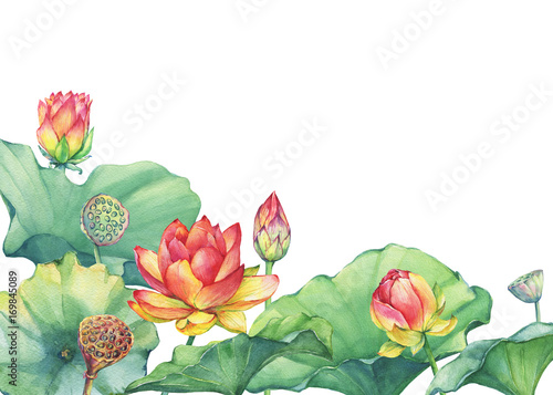 Border Frame Of Pink Lotus Flower With Leaves Seed Head Bud
