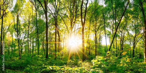 wieczorne-slonce-i-zielony-las-pelen-drzew