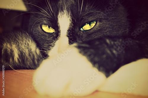 Poster Croquis dessinés à la main des animaux Katze