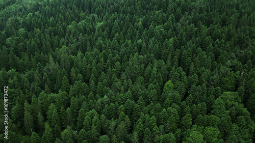 Forets Forest by drone