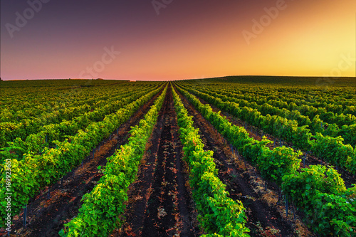Foto op Plexiglas Wijngaard Beautiful Sunset over field of vineyard valley in Europe