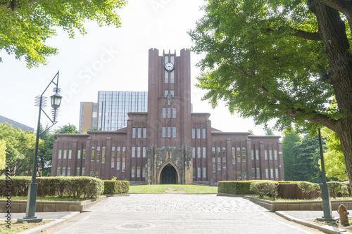 Photo 東京大学 安田講堂 春 銀杏並樹