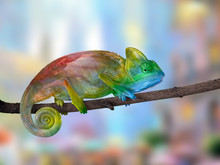 Chameleon On A Branch With A S...