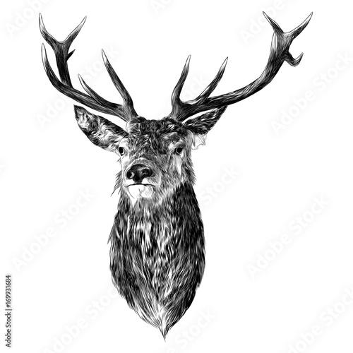 Naklejki Jeleń   deer-sketch-vector-graphics-monochrome-head-with-horns