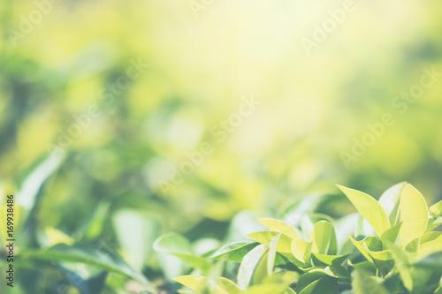 Fototapety, obrazy: green leaves background.