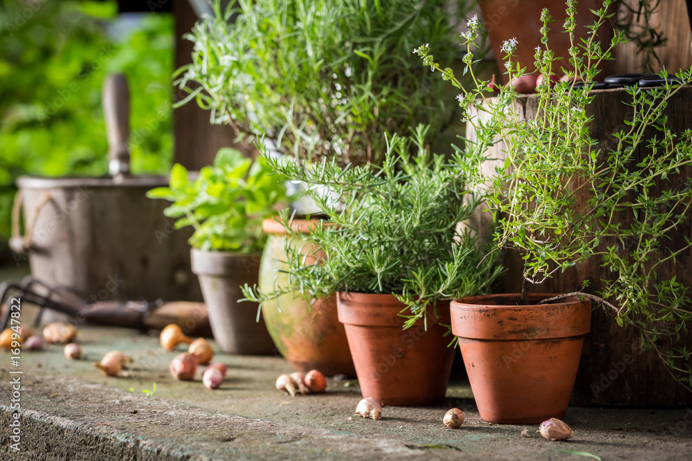 Fototapety, obrazy: Aromatic and healthy herbs on the old porch