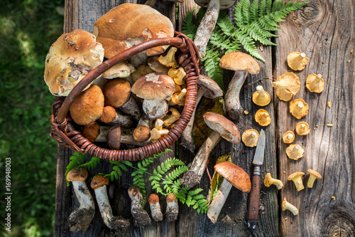 Edible wild mushrooms straight from the forest