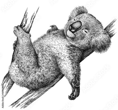 czarno-bialy-grawerowac-na-bialym-tle-koala