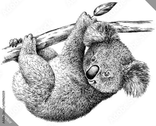 Naklejki koala  black-and-white-engrave-isolated-koala-vector-illustration