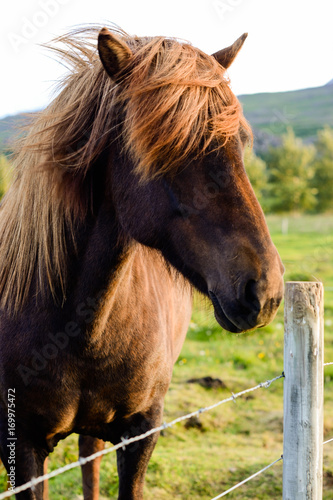 horse with long hair hiding its eyes Wallpaper Mural