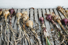 Homegrown Red And White Onions...