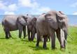 Herd of elephants next to lake Kariba in Bumi national park, zimbabwe