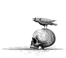 Raven Bird Perch On Skull. Isolated On White. Hand Drawing Vector Art. Sketch Vector Illustration. Line Art Composition.