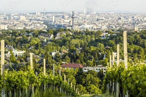 Wien Kahlenberg Weingarten Blick Auf Die Stadt österreich Buy
