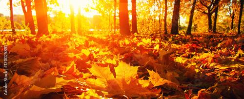 Plakat jesienne drzewa na słońcu