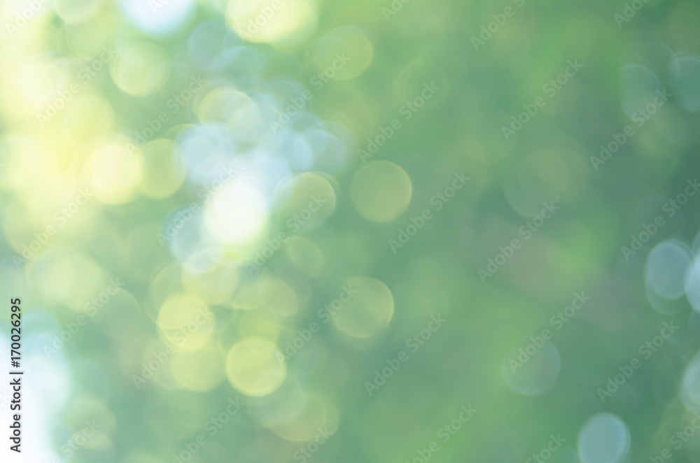 Fototapety, obrazy: Copy space of nature green bokeh sun light flare and blur leaf abstract texture background.