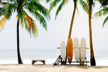 Surfboard And Palm Tree On Bea...