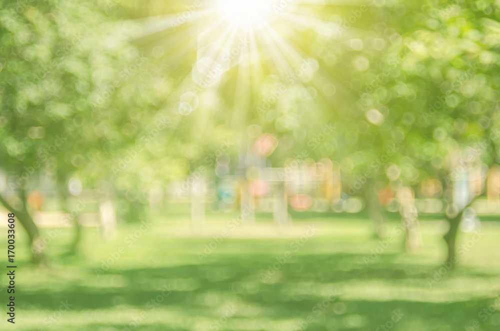 Fototapety, obrazy: Blur nature green park with sun light abstract background.