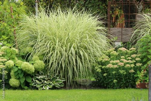 Papiers peints Hortensia Summer Garden green-white, Sommergarten, gepflegte moderne Gartenanlage in grün-weiß