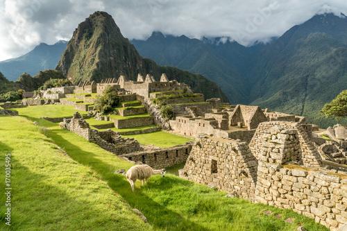 Grasendes Lama in den Ruinen von Machu Picchu