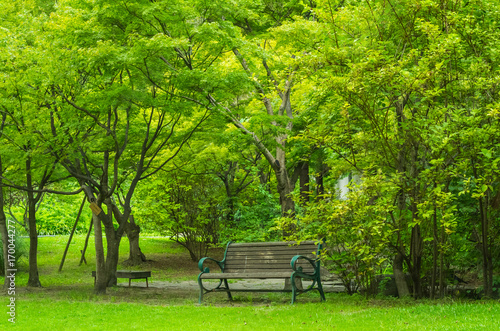 Valokuva  公園の風景